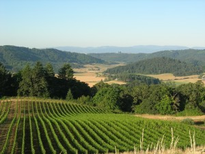 A weekend in Oregon with pinot noir